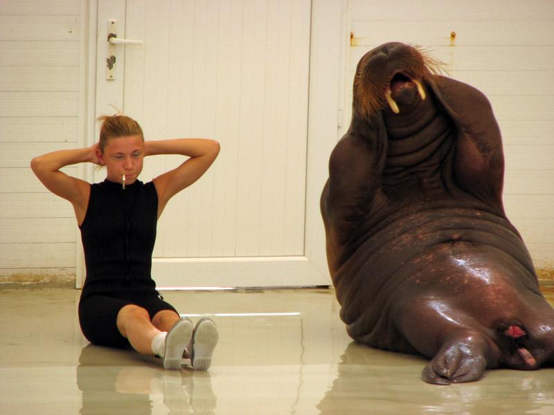 морж, диета, снизить вес